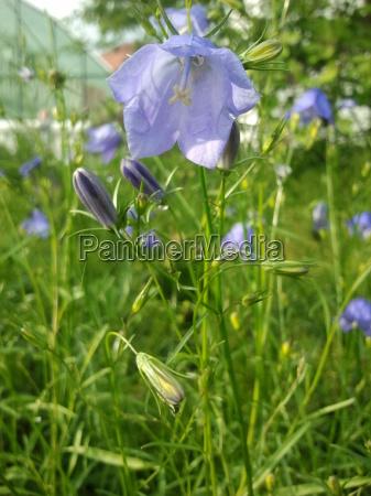 flower, plant, green, bloom, blossom, flourish - 9425048