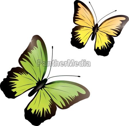 shiny butterflies