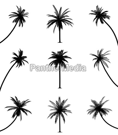 palm trees vector eps