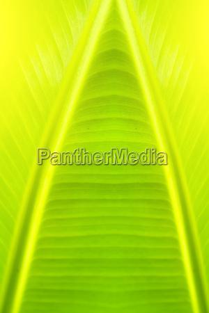green backlit leaf background