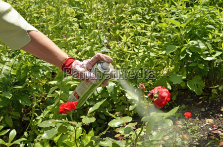 plant protection against aphids