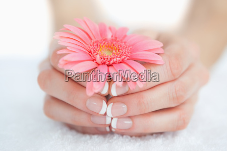 french, manicured, hands, holding, flower - 9550718