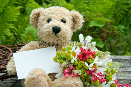 daisy daisies green teddy bear teddy