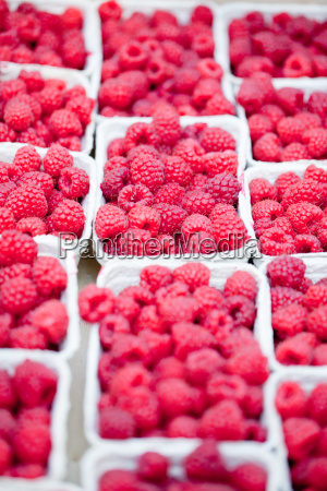 fresh sweet red raspberry on the