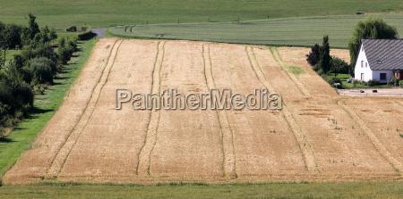 shortly before harvest