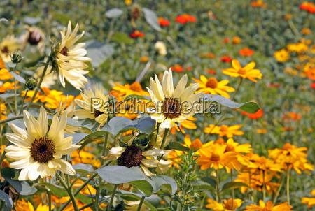 flowering summer garden