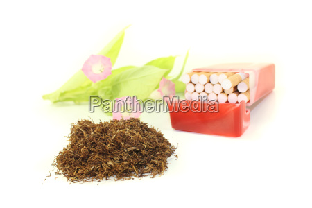 tobacco with cigarette case and plant