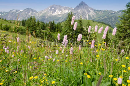 flower meadow with flowers in the