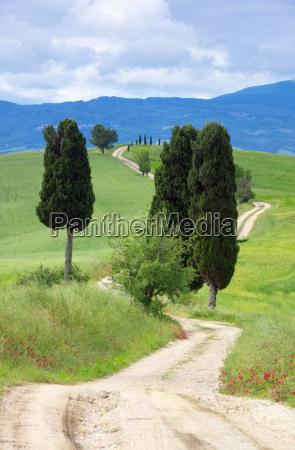 tuscany cypress with path tuscany