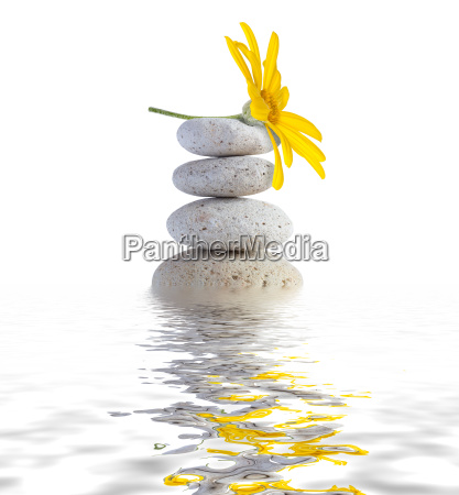 zen spa stones with flower