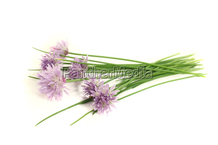 chives with leaf and flower