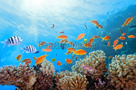 coral, scene, on, the, reef - 9782352