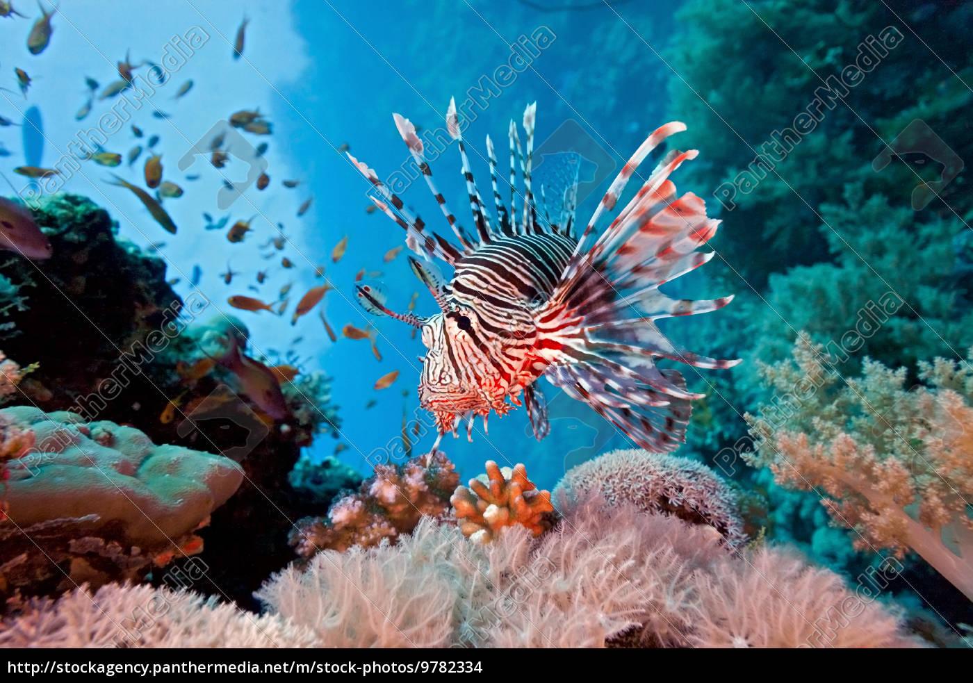 lionfish - 9782334