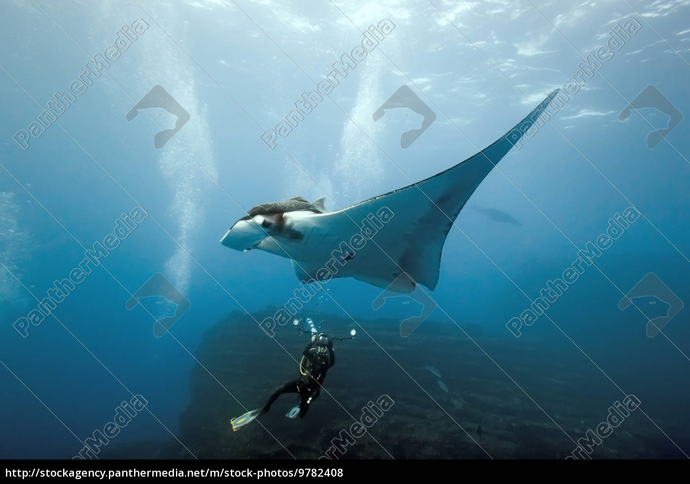 manta, and, photographer, on, the, reef - 9782408