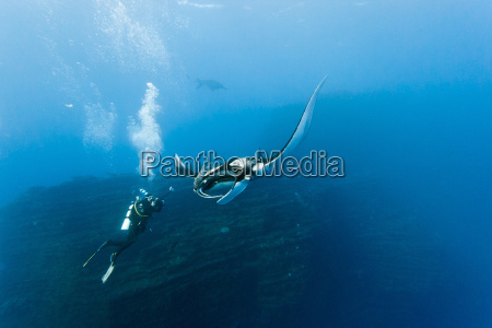 manta and photographer on the blue