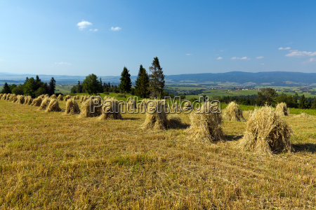 field with some bundles of hay