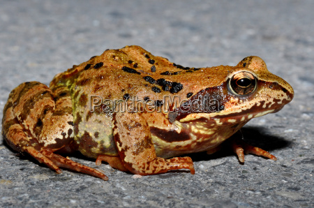 frog on the forest path