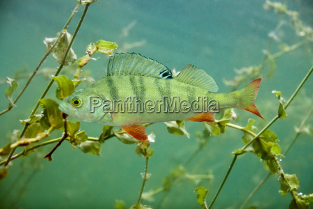 perch, in, the, lake - 9828294