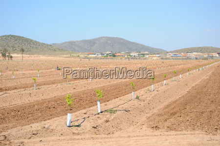 spain new orange plantation