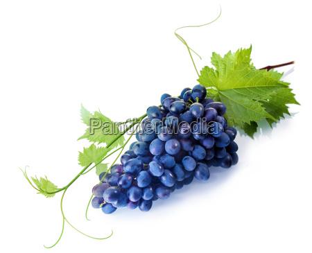 tempting fresh purple table grapes
