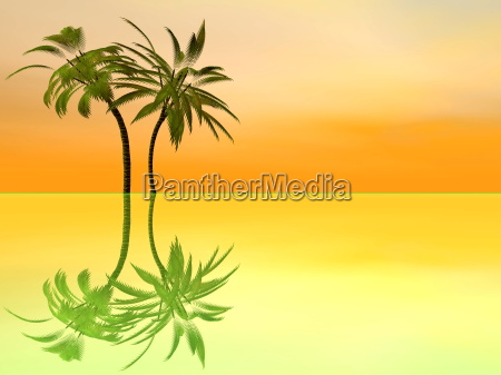 palm trees by sunset 3d