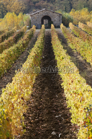rows of vines and vineyards
