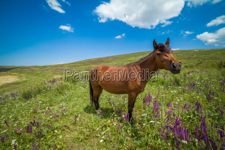 funny bay horse on the grassland