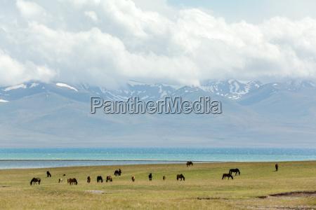 grazing horses at the lake song