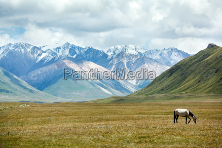 grazing horse in mountain valley