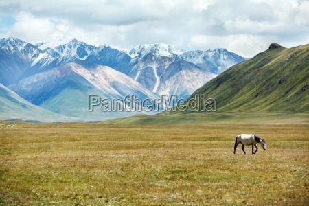 horse walking in mountains