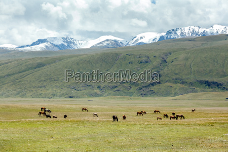 horses grazing near stream in mountains
