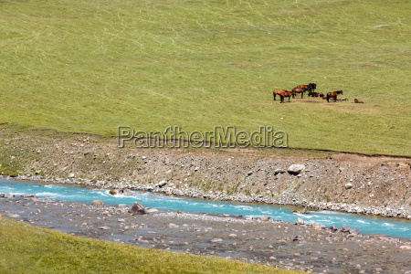 horses resting near blue river