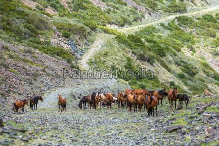 herd of horses on stony path