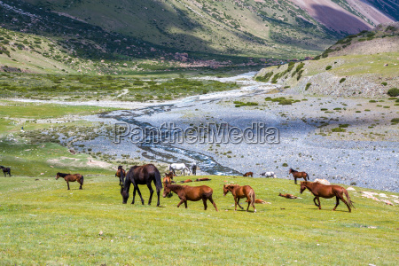 herd of horses in mountains near