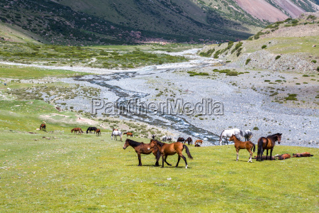 group of horses with resting colts