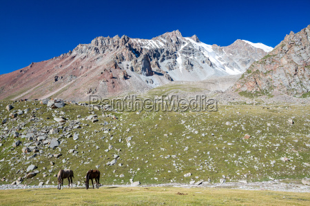 mountain landscape with two horses