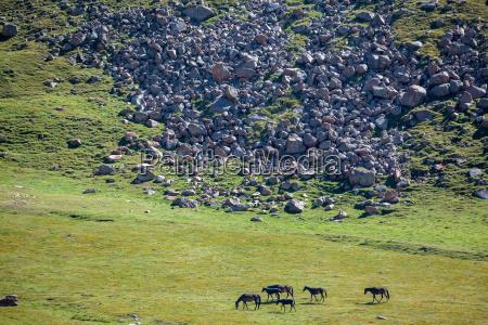 group of dark horses