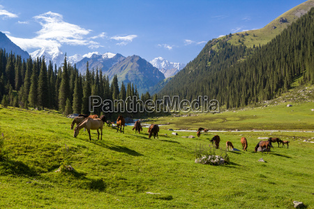 mountain, landscape, with, herd, of, horses - 10016808