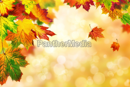 autumn bokeh background decorated with colorful