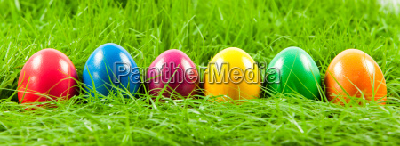 easter, eggs, in, fresh, green, grass - 10045386