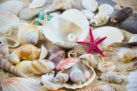 the, exotic, sea, shell, ., treasure - 10045192