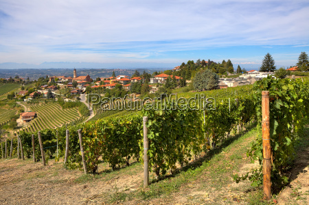 vineyards on the hills and small