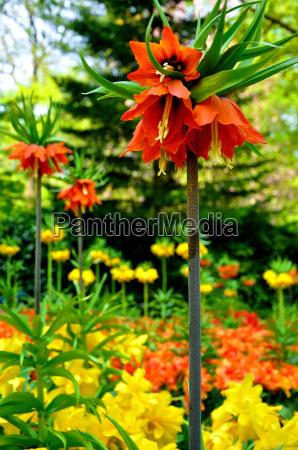 leaf, park, garden, tourism, flower, flowers - 10053794
