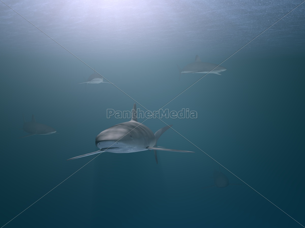 sharks - 10061624