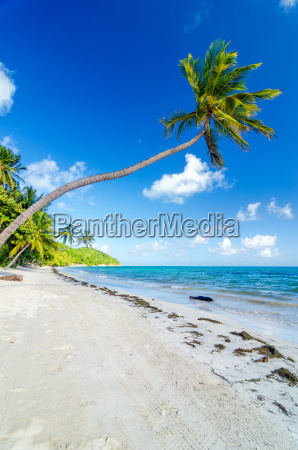 deserted, beach, and, palm, trees - 10091556