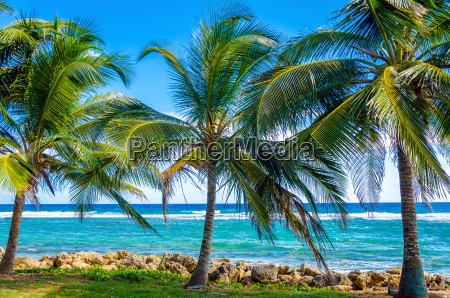 palm, trees, and, sea - 10091598