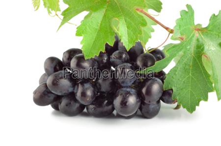 fresh blue grape isolated