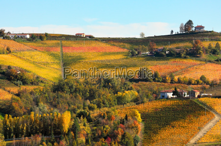 view of colorful autumnal vineyards on