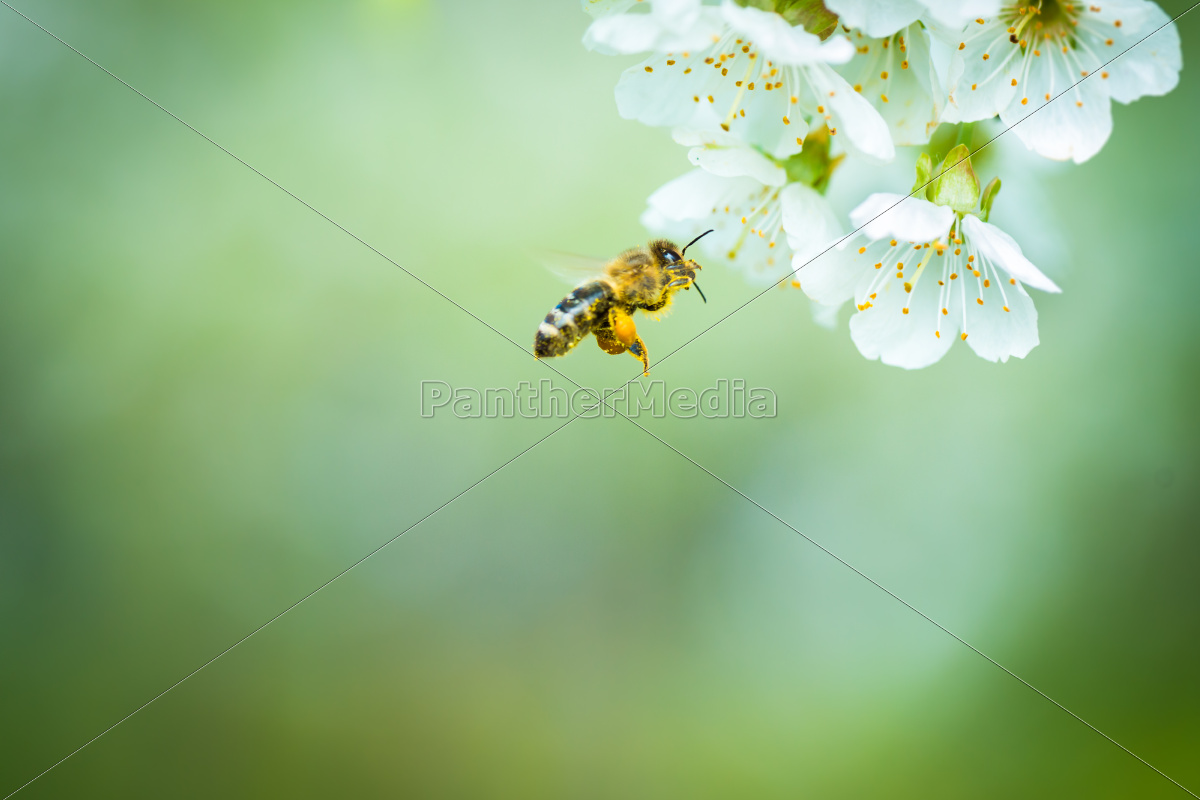 detail, tree, garden, insect, spring, bouncing - 10110621