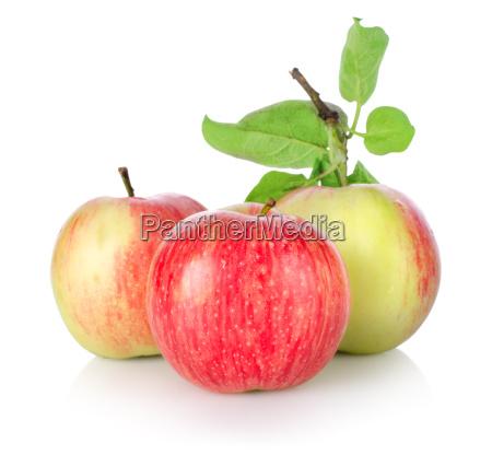 three, ripe, apples, isolated - 10116357